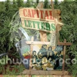 Greensleeves-Lp-Vinyard / Capital Letters